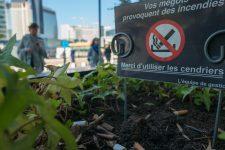 Mégots de cigarette:  la prévention a encore du chemin à faire